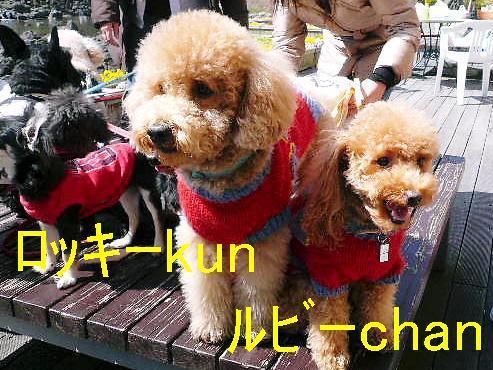 ワンバナ(wannbana)看板犬